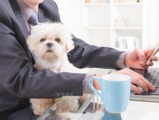 Да ли кућни љубимци позитивно утичу на стрес на радном мјесту?